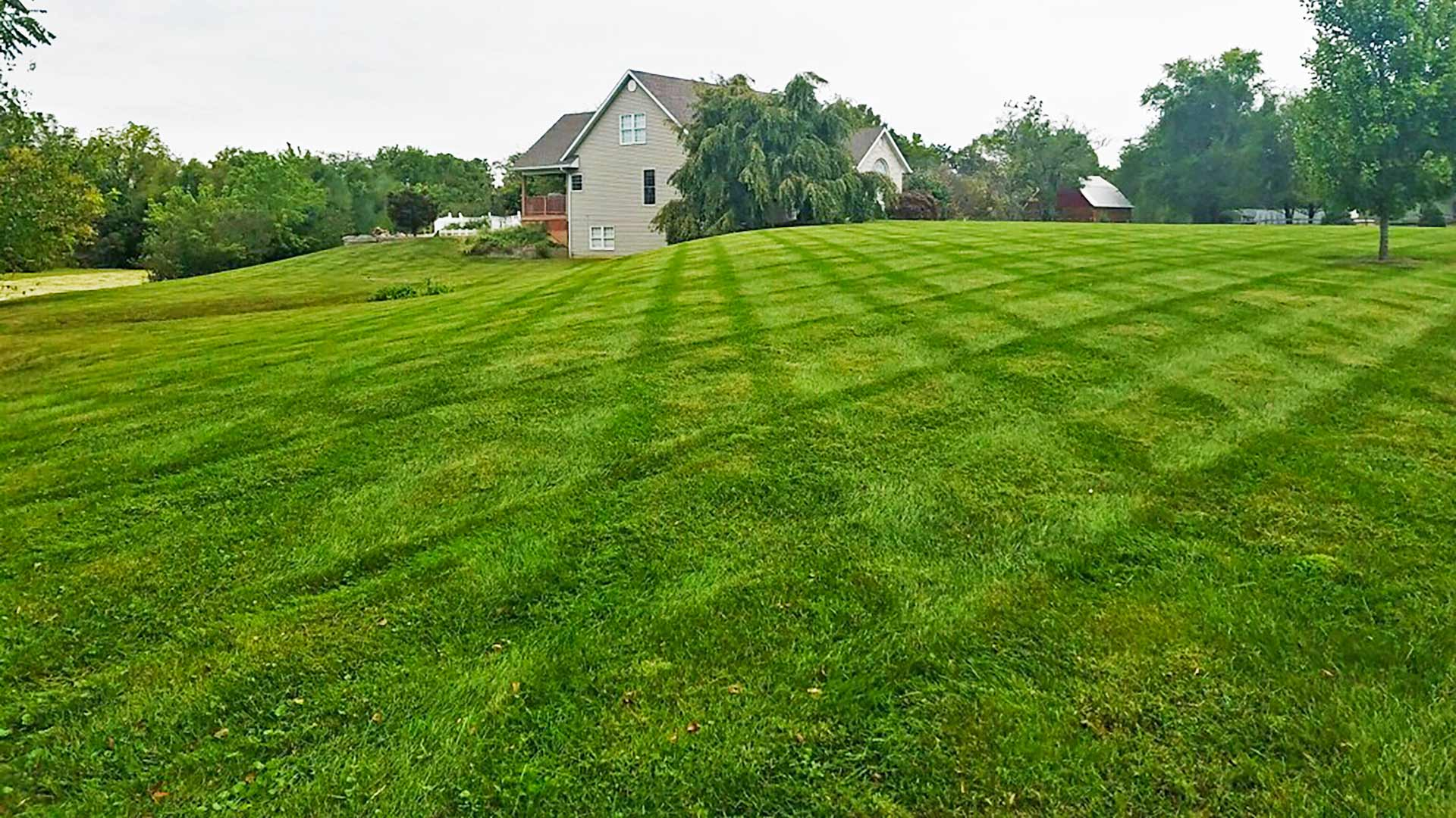Fertilized lawn in Edwardsville, IL.