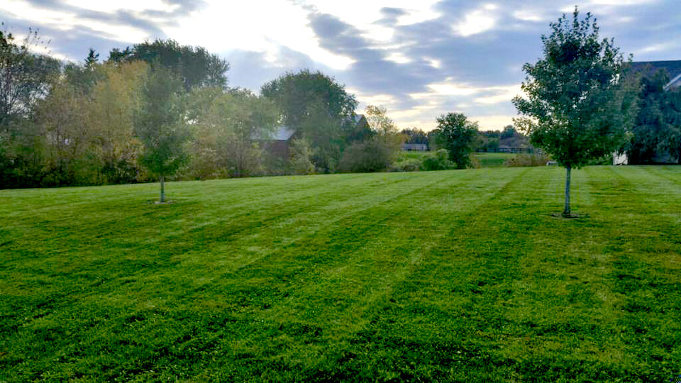 Large back yard in Alton, IL with stripes after mowing.