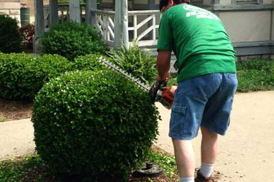 Bush trimming by Element Turf & Outdoor Solutions, LLC at a home in  Godfrey.